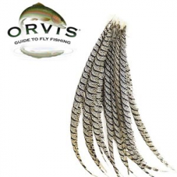 Orvis Lady Amherst Center Tail Natural
