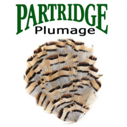 Partridge Plumage