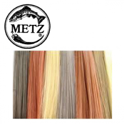 Metz Betts` Tailing Fibers